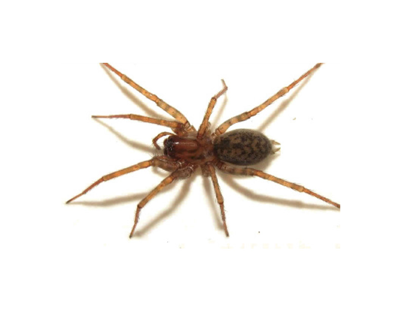 araignée desinsectisation cremieu