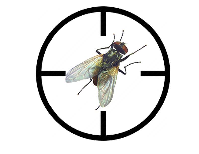 desinsectisation-mouches-la-tour-du-pin